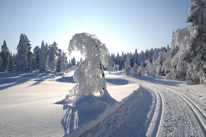 ski_oyevannskippen
