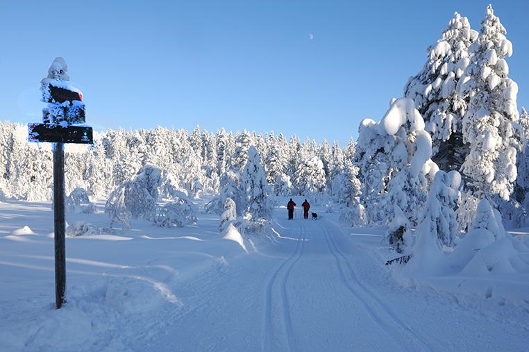 skitur_2_hund